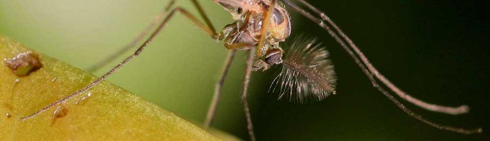 Insectos No